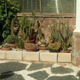 Un Lugar Para los Cactus